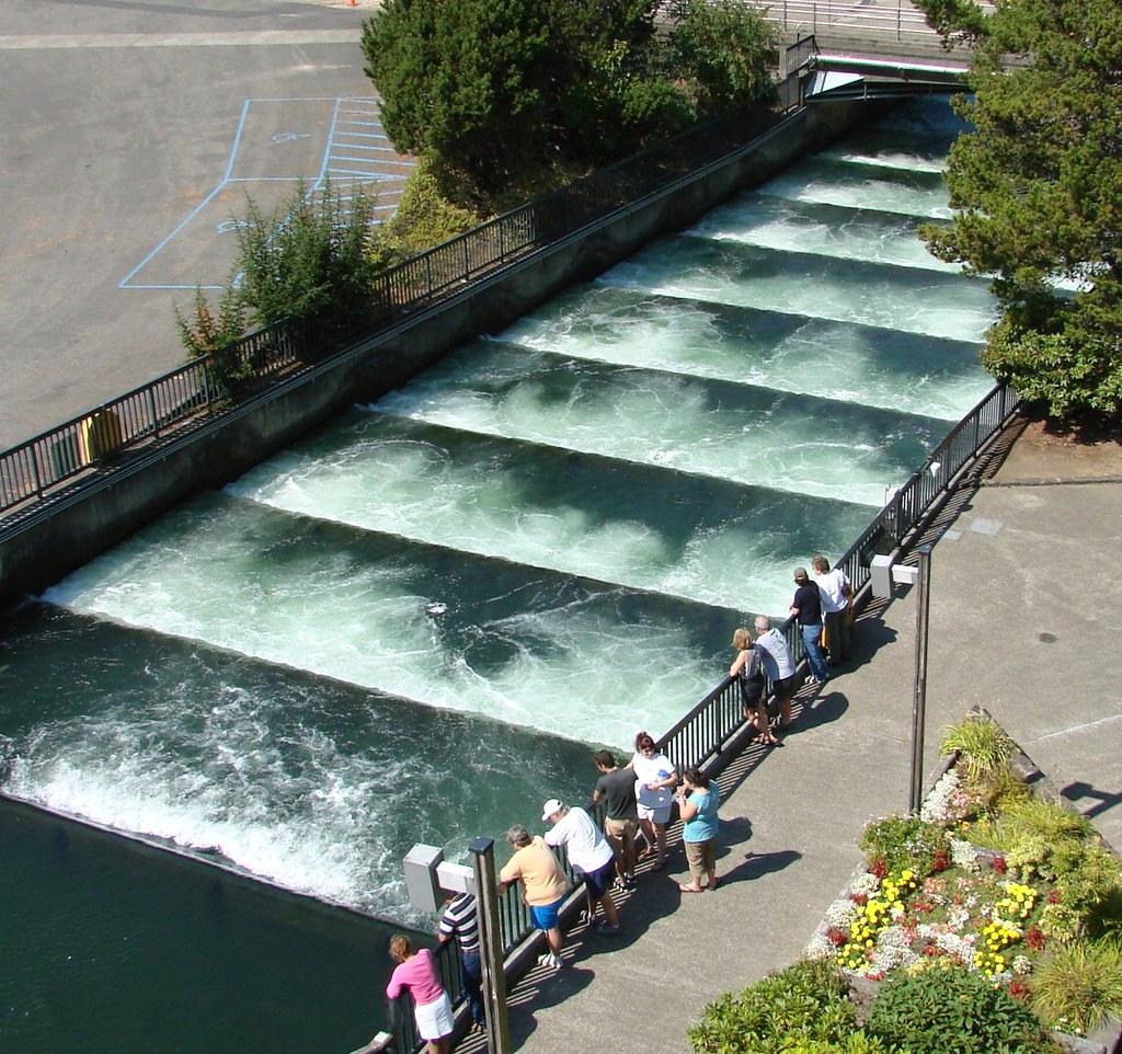 Fish Ladder Bonneville Dam Columbia River Or 2006 Flickr