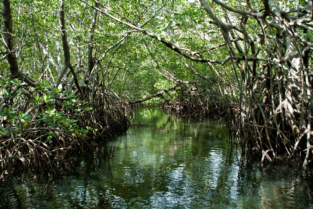 mangroves in senegal sine saloum