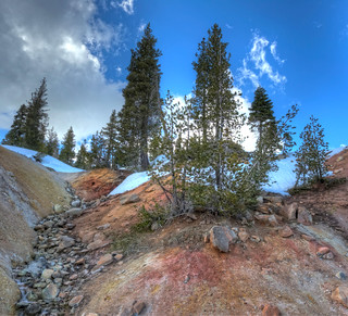 Green Tree on Red Rock | by Daniel J. Mueller