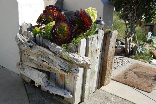 Outer Sunset Driftwood Garden | by FarOutFlora