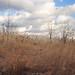 Meadowlands / Secaucus 7