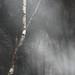 Tree smoke