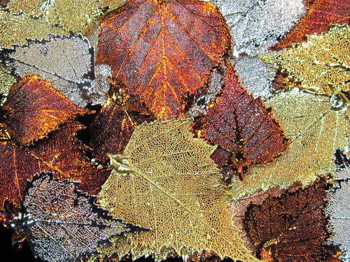 Leaves Painted with Metals | by shaire productions