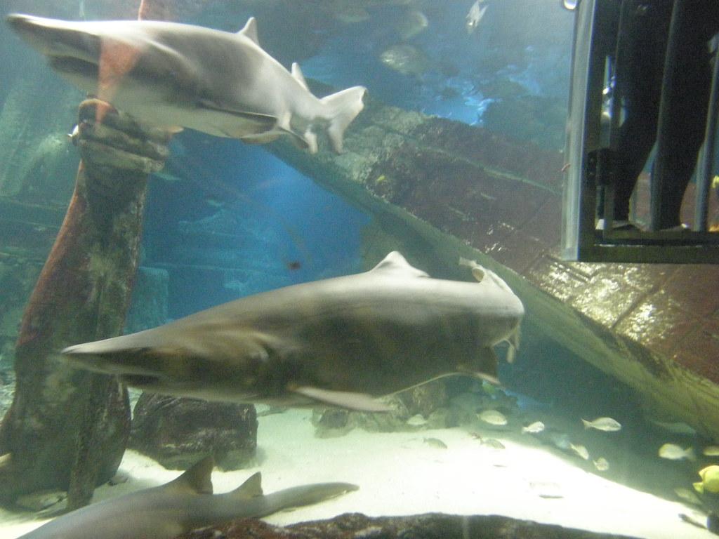 Shark Dive Long Island Aquarium