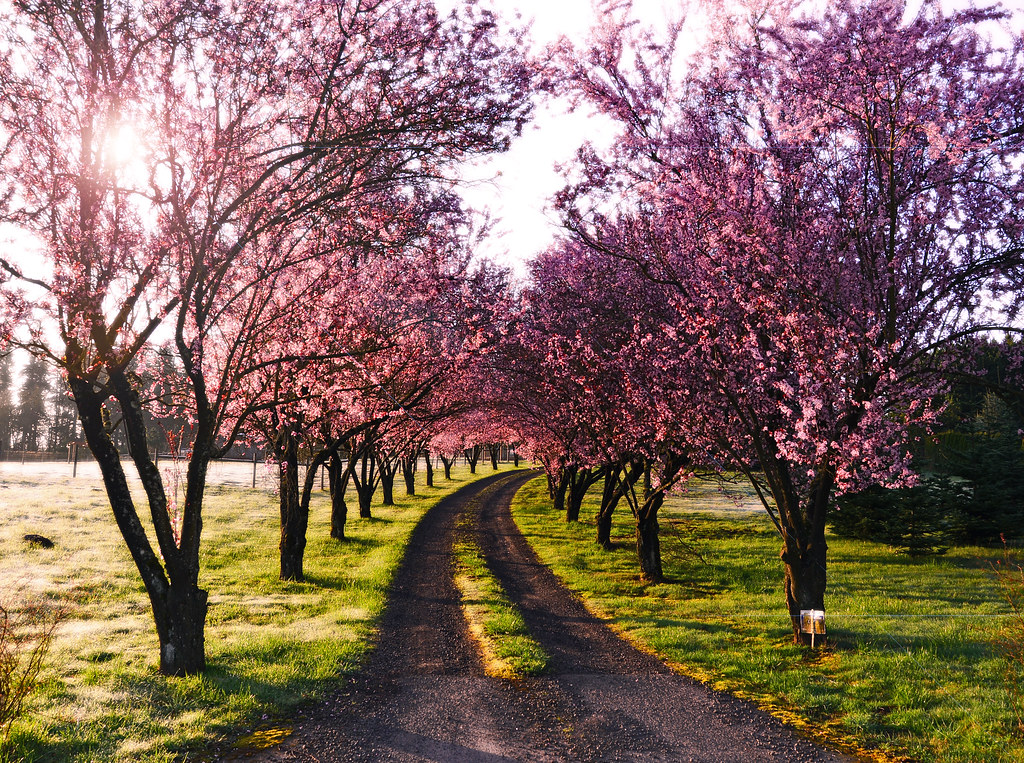Spring Road  Darrell Wyatt Flickr