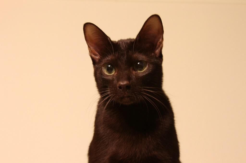 CATSгалерея  Котоарт  Фото и картинки кошек и котят