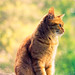 The wisdom of cats is infinitely superior
