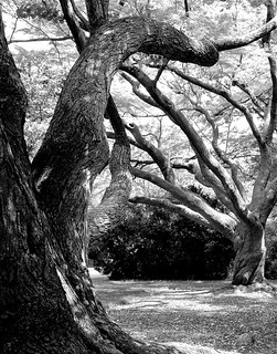 Trees in a Garden | by Brooklyn Botanic Garden