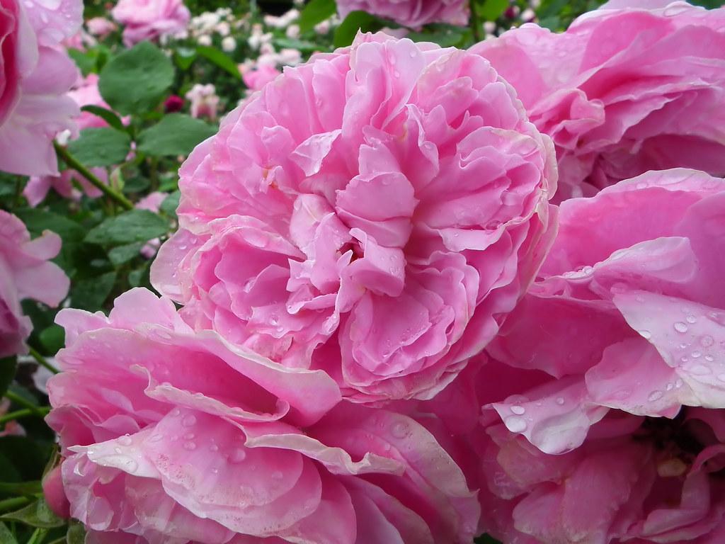 rose mary rose rose mary rose. Black Bedroom Furniture Sets. Home Design Ideas