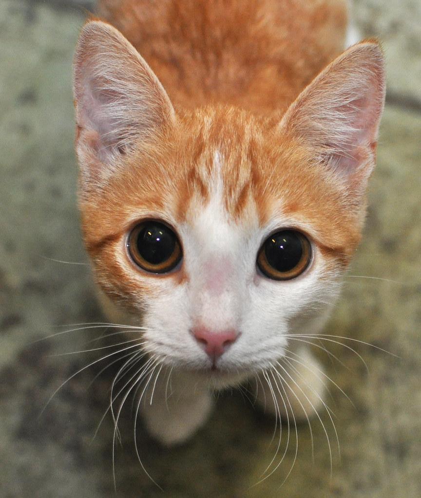 Orange Kitten   I am a cat photographer in San Francisco ...