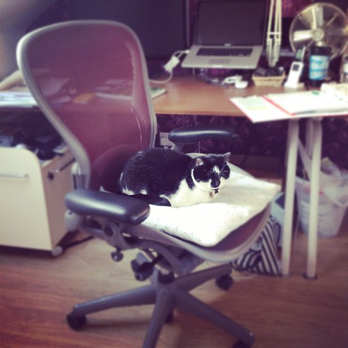 Office #cat gets her Aeron setup just right. | by SimonDoggett