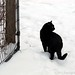 Mr. Midnight in the snow
