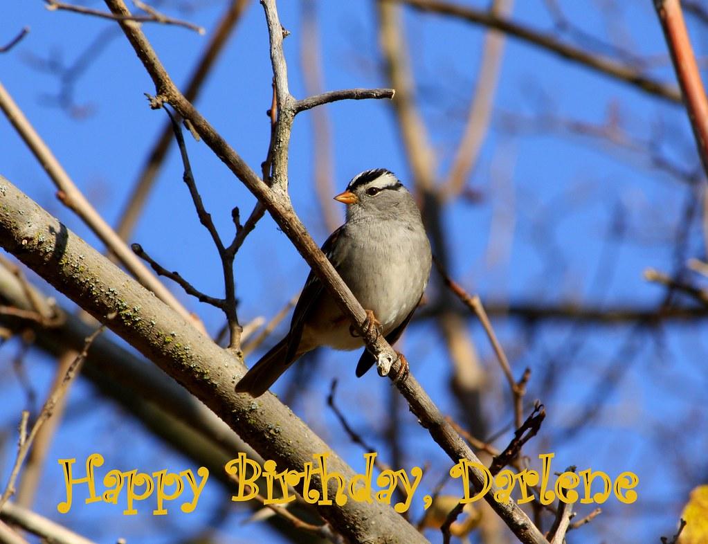 Happy Birthday Darlene Cake Images
