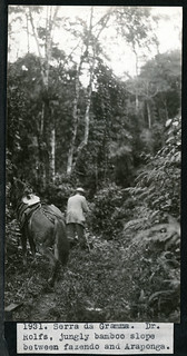 Mary Agnes Chase's Field Work in Brazil, Image No. 1931. Serra da Gramma [sic]. Dr. Rolfs, jungly bamboo slope between fazendo and Araponga. | by Smithsonian Institution