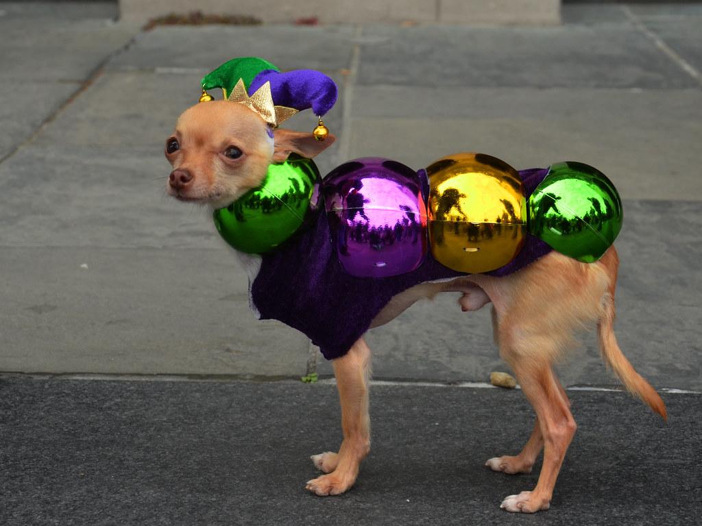 Image Result For Mardi Gras