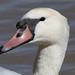 IMG_1360-MUSW-face-closeup-72dpi-e-bird