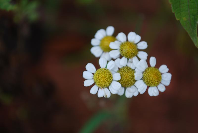 Flor De Marcela Ruy Ferrari Flickr
