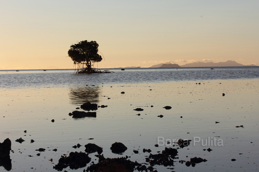 007_Mangrovia con bassa marea | OggiScienza | Flickr