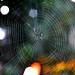 Spider Web - Telaraña