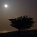 Tree in moonlight    (5 May 12)