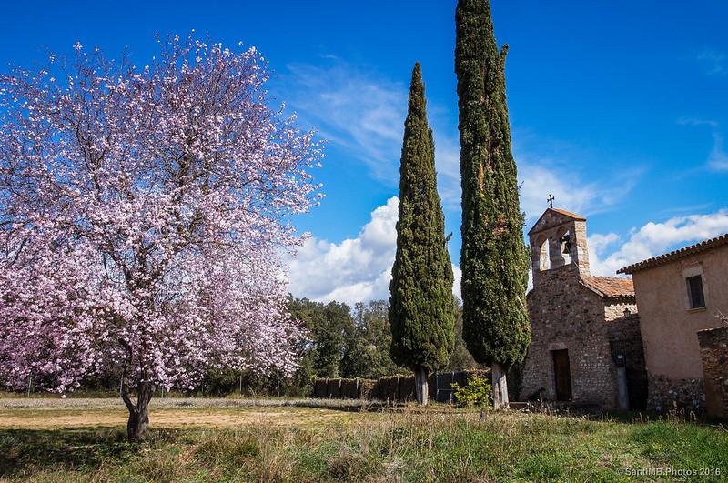 Bonita vista de la fachada de la ermita de Togores con el ciruelo en flor