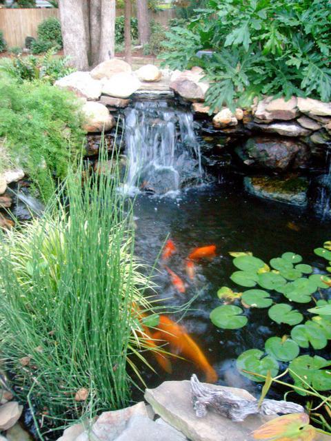 My Koi Pond Kasmfa Flickr