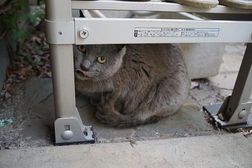 庭の猫(先客)
