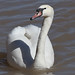 IMG_1360-MUSW-face-72dpi-e-bird