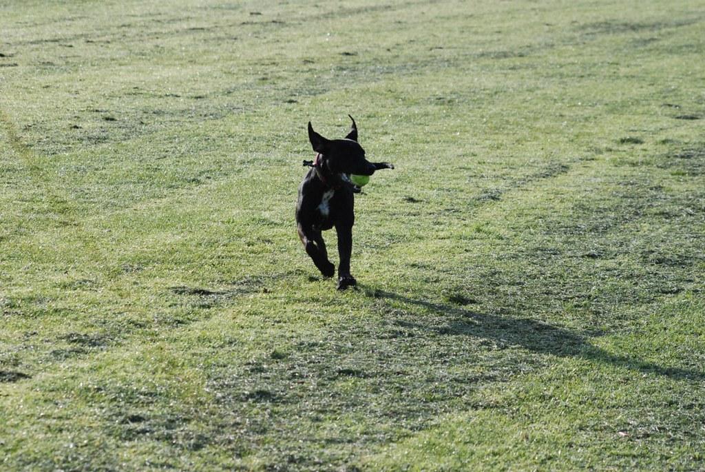 Dog Walking Jobs Sheffield