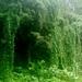 Manoa Falls walk
