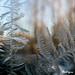 Crystal Forest - Forêt de cristal