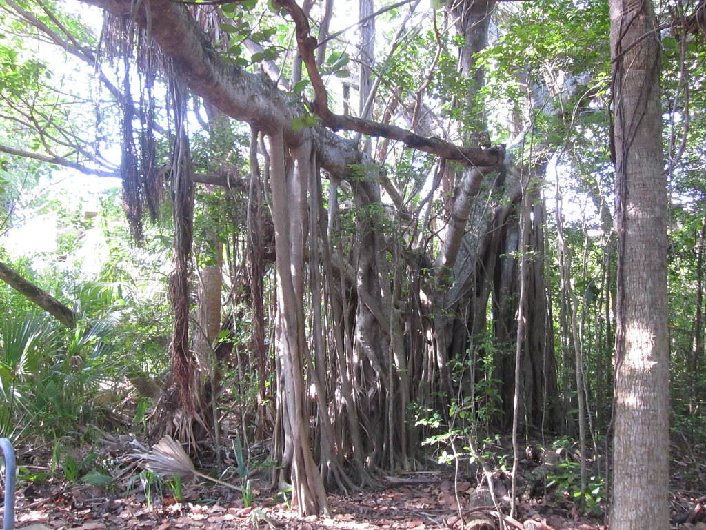 Macarther State Park Palm Beach
