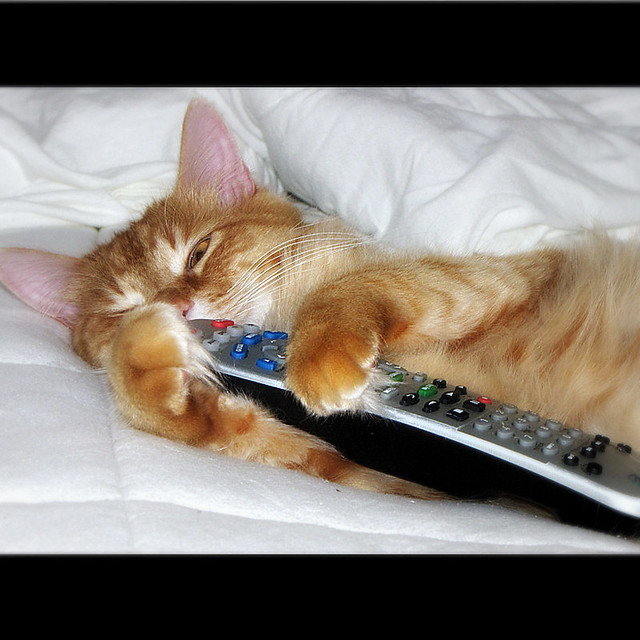 uhhhh ? what ? Noooo , NOT sleeping , watching TV , Don't touch that remote !!!!!!!