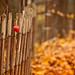 I ♥♥♥♥ Fence Friday