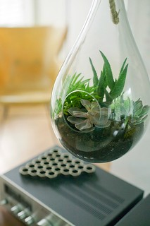 Refilled Terrarium | by analogdialog