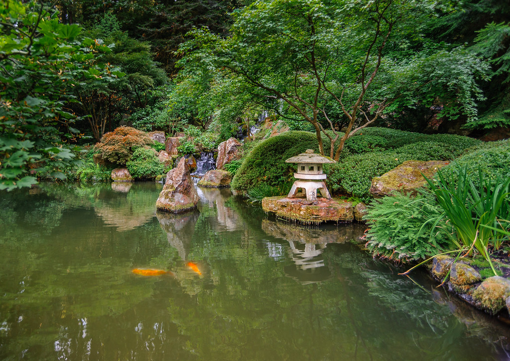 Koi pool in japanese gardens portland oregon the for Portland japanese garden koi