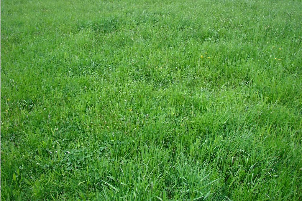 Image Result For P O Of Green