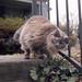 Neighborhood Kitty