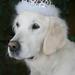My golden princess