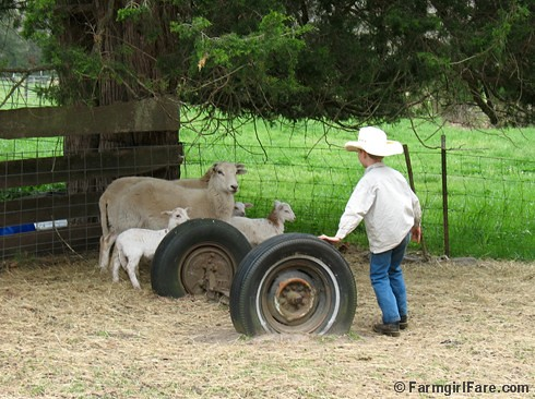 Little sheep wrangler 1 | by Farmgirl Susan