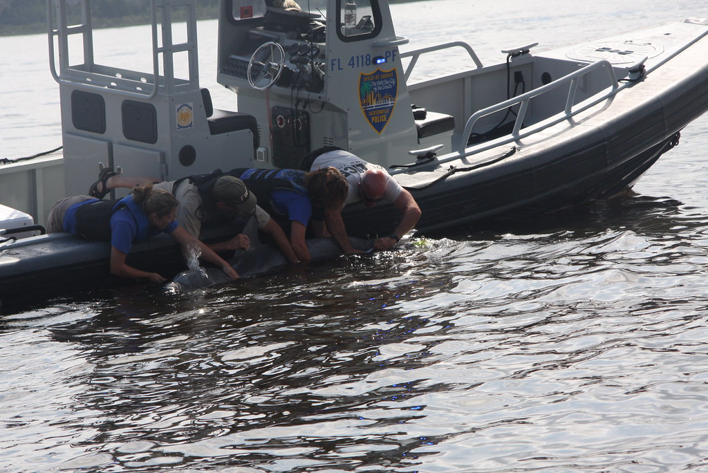 Dolphin rescue 3 photo by fwc officer robert brienza for Florida fish and wildlife officer