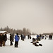 Waiting for mushers to arrive
