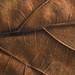 Dead Leaf Detail
