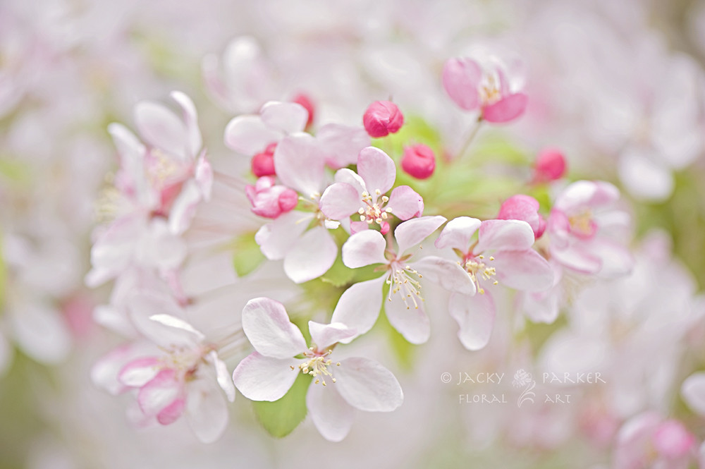 Photograph Spring Haze by Jacky Parker
