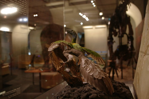 Museon Archaeopteryx | by milov