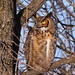 Great Horned Owl...#5