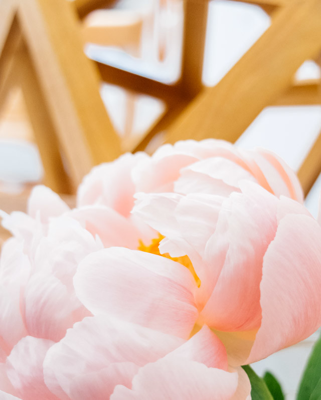 peony infront of  wooden lamp