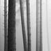 Ridge trees