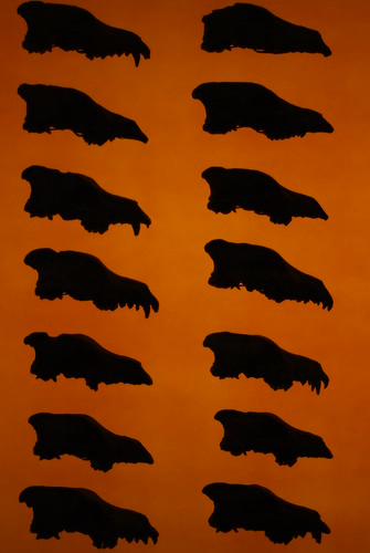 Dire Wolf (Canis dirus) skulls at the Page Museum at the La Brea Tar Pits | by Dallas Krentzel