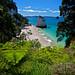 Te Hoho Rock: Cathedral Cove